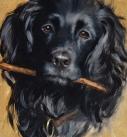 dog-artist-cocker