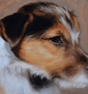 dog-artist-jack russell