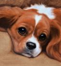 dog-artist-kc